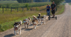 Cart run to train puppies, September 2009