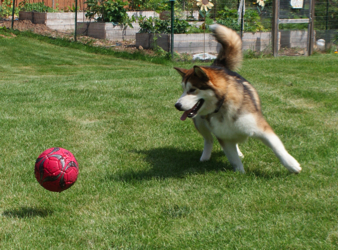 Kosmo the soccer star makes the play!