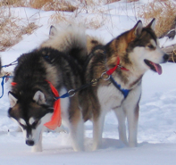 Aurie (right) running in dual lead with her brother Major, 2007