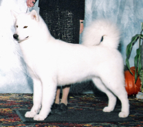 Mauya was bred to Major in 2011