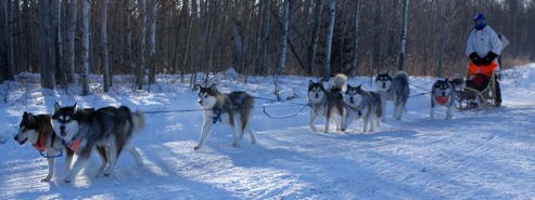 Sassy (behind lead dogs) on her first 10 mile run for a Working Team Dog title, January 2010