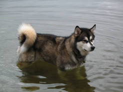 Summit conducts a scientific demonstration of the Ripple Effect, Malamute style!
