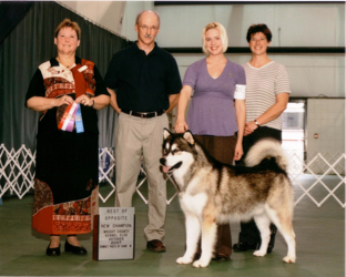 Howler finishes his Championship, October 2007 at the Wright County Kennel Club Show, Hutchinson MN