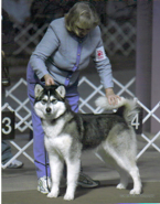 Mirka showing as a puppy